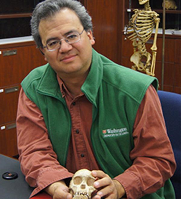 avid Strait holds the skull of an Australopithecus africanus child