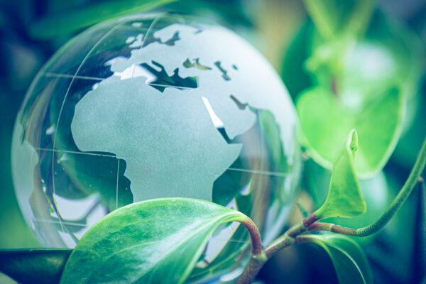 glass globe with plants