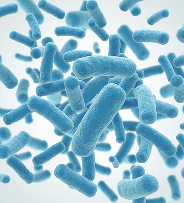 3d illustration of bacteria